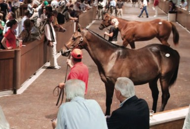 Equine Market Looks for Balance