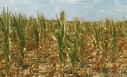 Drought: Agribusiness Expectations Get Scorched