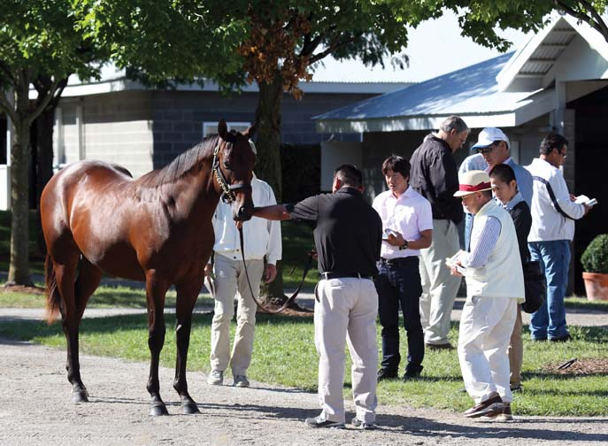 Members of a Japanese buying group inspect a colt at the Keeneland September Yearling Sale. Seven different groups of Japanese were among many foreign buyers active at the 2012 sale.