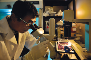 Research scientist Bin Xing uses a Nikon inverted microscope to examine brain cells in culture.