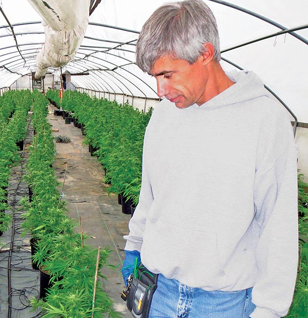 Bill Polyniak, president of Kentucky Cannabis Co., examines one of the test crops grown around the state in 2014 under a program to assess which strains might be best suited for commonwealth agribusiness if federal prohibitions are lifted.