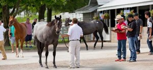 Keeneland's January Horses of All Ages sale this year sold 948 Thoroughbreds for $35.3 million.