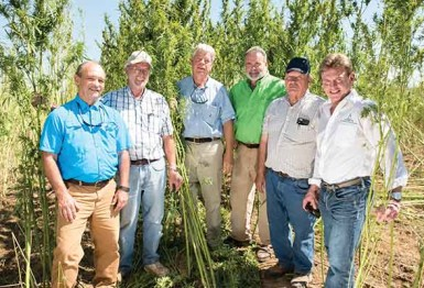 Hemp: An Old Crop with a New Opportunity