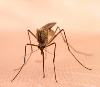 The mosquito-borne chikungunya virus has been found in one Kentuckian and is being tested in nine others.
