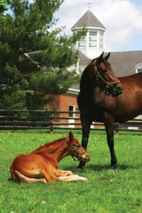 A mare and her foal are shown on the Overbrook horse farm in Lexington in this file photo.