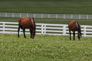 Horses graze outside the Alltech Arena at the Kentucky Horse Park.