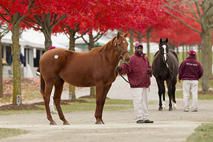 Keeneland November Sales 2011