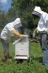Student laborers Spencer Gravitt and Oliver Pogue participated in Berea College's honey bee breeding project run by Professor Sean Clark.
