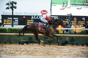 Orb rallied from far off the pace to take command in mid-stretch en route to a 2 ½-length victory Saturday over longshot Golden Soul to win the 139th running of the $2,174,800 Kentucky Derby. (Photo courtesy of Churchill Downs)