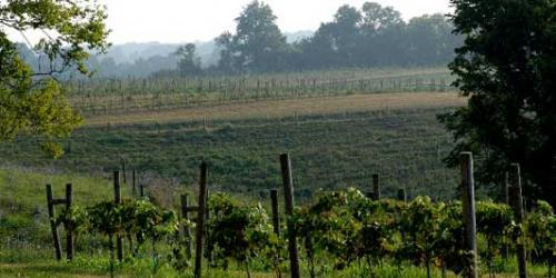 Acres of Land Winery in Richmond. (Photo courtesy of Acres of Land)