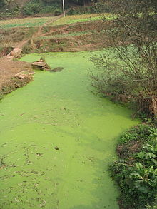 An example of a body of water with harmful algal bloom (HAB).