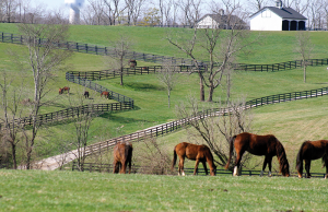 A view at Golden Creek Farm in Shelby County.