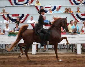 Shelby County is known for its American Saddlebred farms. The Shelbyville Horse Show was named to Southeast Tourism Society's Summer Top 20 Festival and Events for 2013.