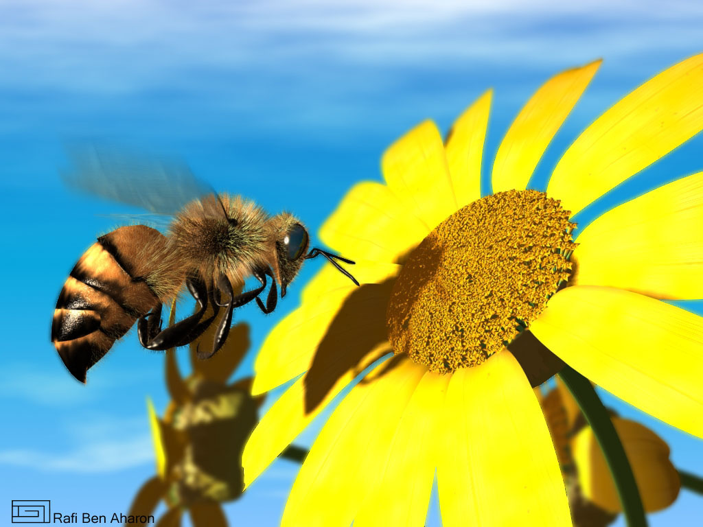 Neonicotinoids, a type of systemic insecticide for flowering lawn weeds frequented by native bees, such as dandelions and white clovers, negatively impact local pollinator populations.