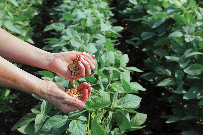 Soybeans cash receipts grew significantly in 2012, more than 28 percent.