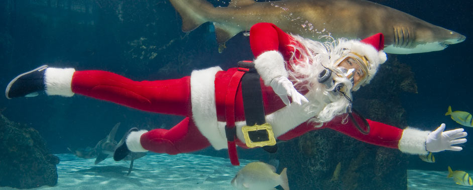 Scuba Santa's underwater dive show at the Newport Aquarium has been called one of the most unusual holiday experiences in the country