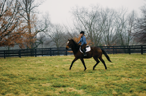Volunteer rider Rachel Meffert exercises Where U At, a 6-year-old Thoroughbred gelding available for adoption.