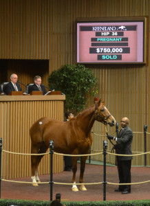 Broodmare Life Happened sold for $750,000 on Monday during the opening session of Keeneland's January Sale.