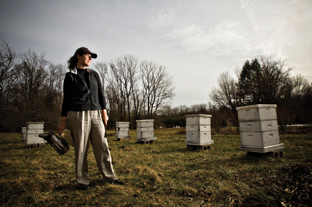 Dr. Tammy Horn, director of Coal Country Beeworks at Eastern Kentucky University, recently received a special grant to continue investigation and assessment of native bee populations on reclaimed surface mining sites in Appalachia.