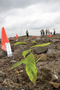 Seedlings such this one on a former coal mining site near Hazard are among 100,000 bee-friendly native Appalachian trees planted on 500 acres since 2008 to produce pollen and nectar favorable for establishing a honeybee industry in Eastern Kentucky.