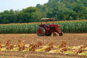 Tobacco, the state's No. 3 crop, brought in  $385 million in 2012.