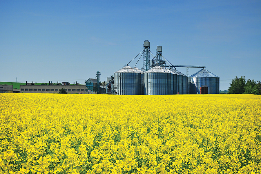 Hart AgStrong is spending $7.3 million to build a canola oilseed processing plant in Western Kentucky. The Trenton facility will employ up to 25 full-time workers. Canola oil is produced from the rapeseed plant, shown here.