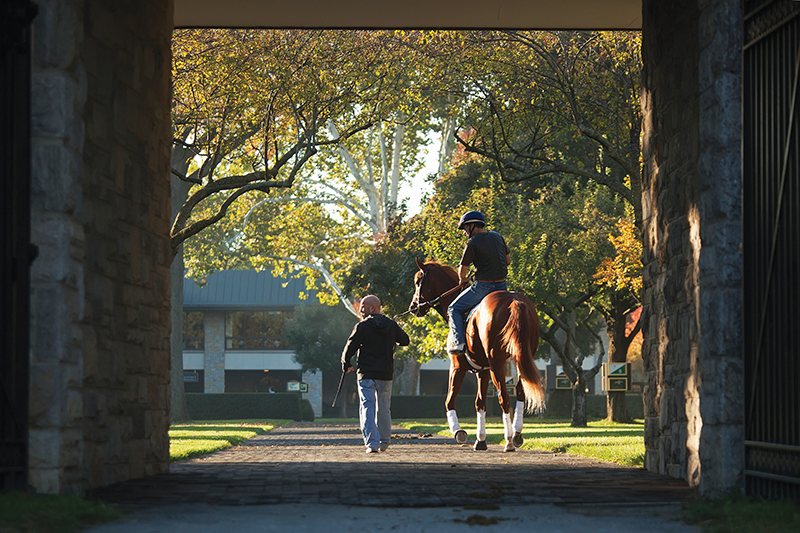 Keeneland, a National Historic Landmark, is one of the world's leading Thoroughbred auction houses.