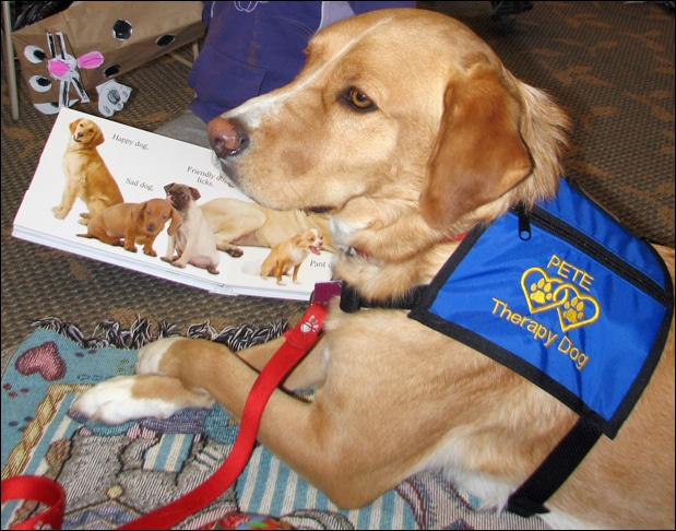 Reading Therapy Dog Training