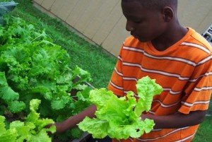 Food Literacy Project photo
