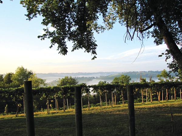 vineyard 2014