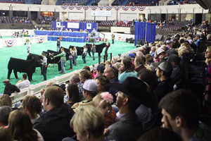 NAILE draws competitors, exhibitors and attendees from 48 states and six foreign countries, and measures a $16.5 million annual economic impact.