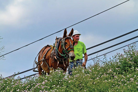 Mixing in traditional means as it moves to the modern cutting edge, People's Rural Telephone Cooperative based in McKee has used a mule named Old Bub to help with its last-mile installations of fiber-optic based gigabit Internet connectivity to all its customers in Jackson and Owsley counties in Eastern Kentucky.