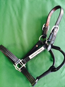 A charity online auction of halters and other Thoroughbred memorabilia will benefit Thursday's Child and Our Mim's Retirement Haven.