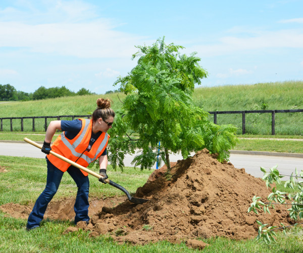 Jacque Marple, a full-time HR Specialist with UPS., helped plant trees along Polo Club Blvd.