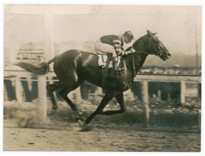 Man o' War at the 1920 Belmont Stakes.