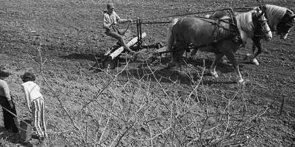 """Look and See: A Portrait of Wendell Berry"" is a cinematic account of the changing landscapes and shifting values of rural America in the era of industrial agriculture, as seen through the mind's eye of writer, farmer and activist Wendell Berry."