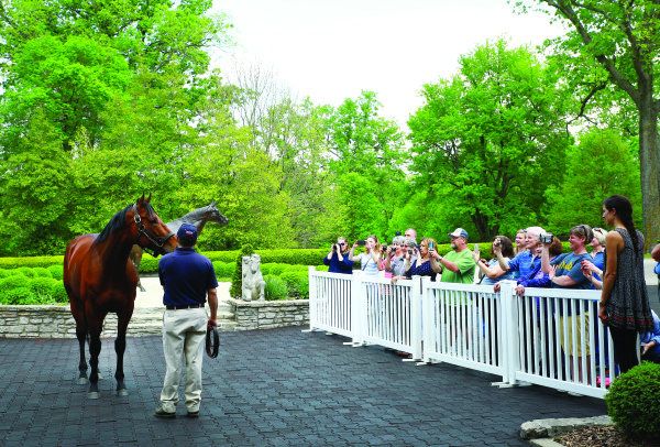Fans get a glimpse of Triple Crown and Breeders Cub winner American Pharoah, the most popular horse for equine tourists in Central Kentucky. He is at Ashford Stud in Woodford County.