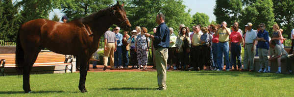Horse Country Inc. was formed in 2014 to serve as a central-booking outlet designed to share the overarching story of Kentucky's rich horse country heritage