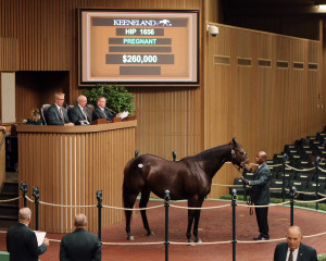 Chris Brothers purchases Aqua Regia at the Keeneland November Sale.