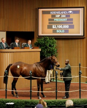 For Royalty, dam of Grade 1 winner Constellation in foal to Bernardini, sold to Summer Wind Equine for $2.1 million.