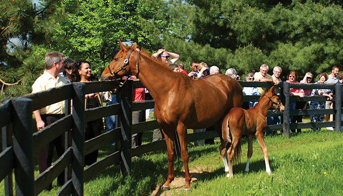 Central Kentucky's famous horse farms are one of the major visitor attractions to the state's rolling green hills.
